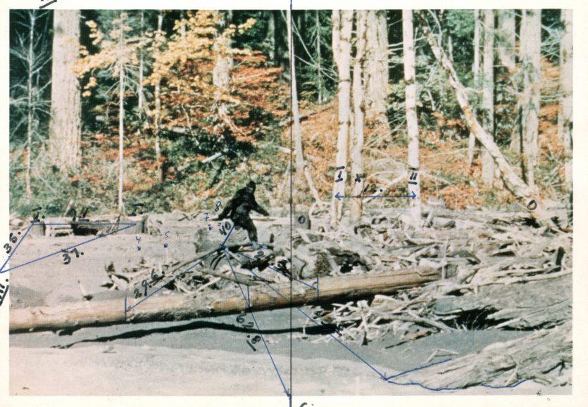 Кадр из фильма Паттерсона-Гимлина, снятого 20 октября 1967 г. / Предоставлено Игорем Бурцевым